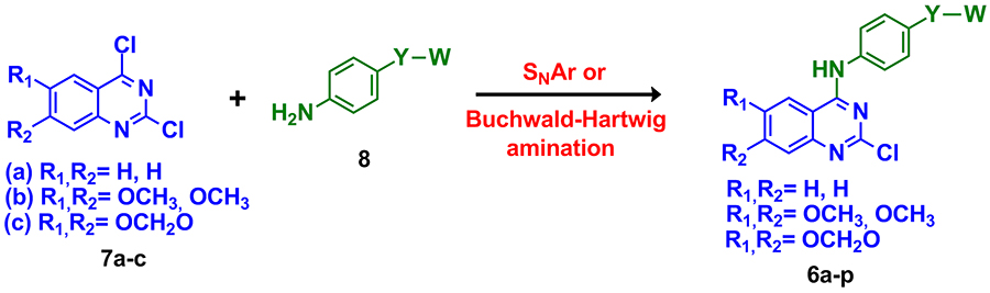 Anual active reports scheme 1 general synthesis of the designed 2 chloro 4 anilino quinazoline compounds 6a p a dipea dioxane 80c 12 h 60 66 b isopropyl alcohol fandeluxe Choice Image